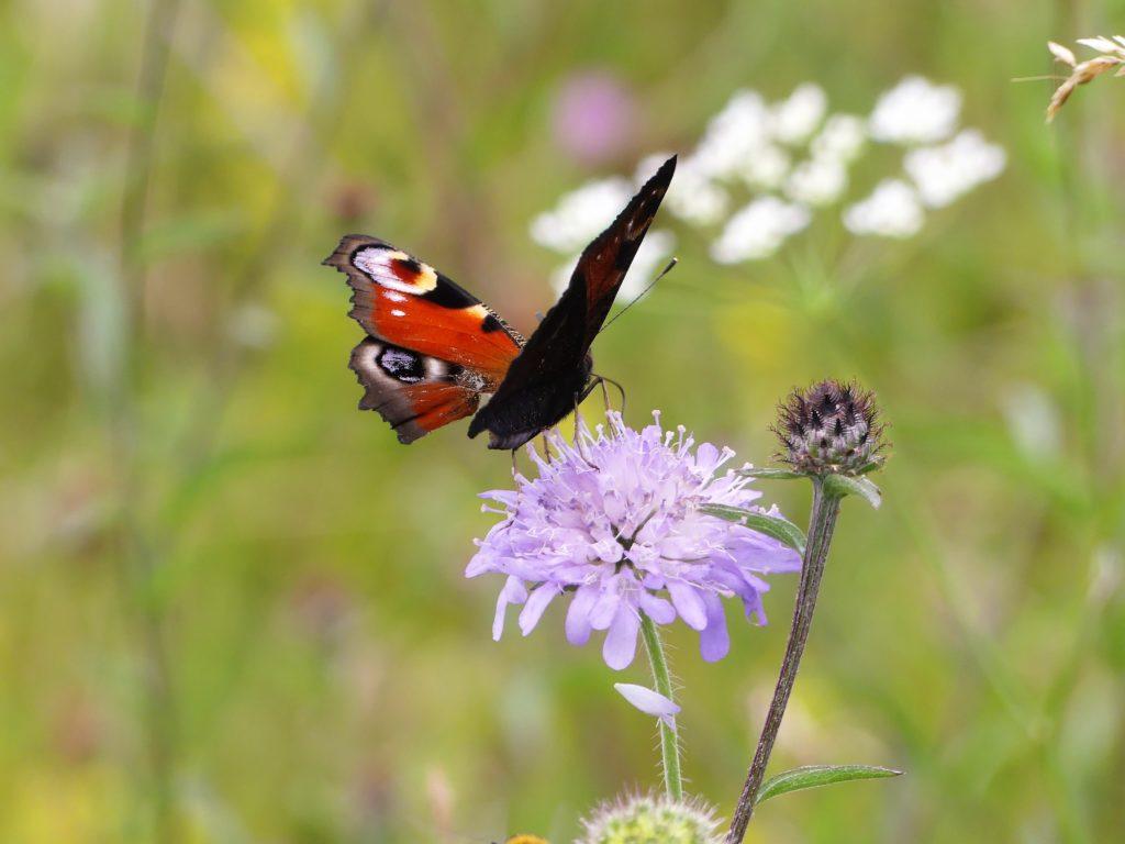 Schmetterling zum Start